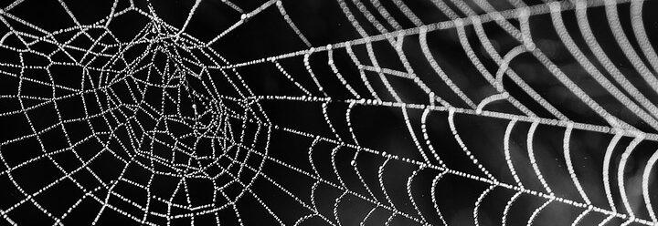 ismerje meg a pókháló ismerkedés segítség